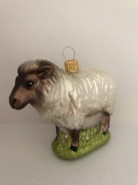 Hampshire Schaf