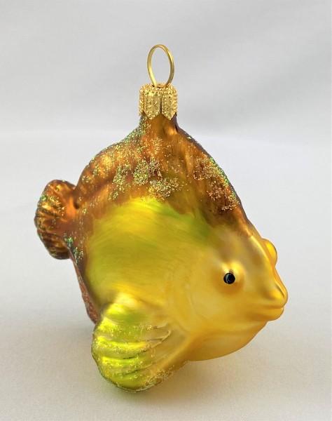 Kleiner Riff-Fisch mit braunen Flossen
