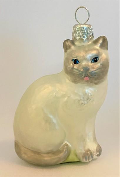 Katze weiss/grau mit blauen Augen