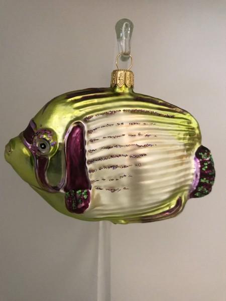 Riff-Fisch mit violetten Flossen