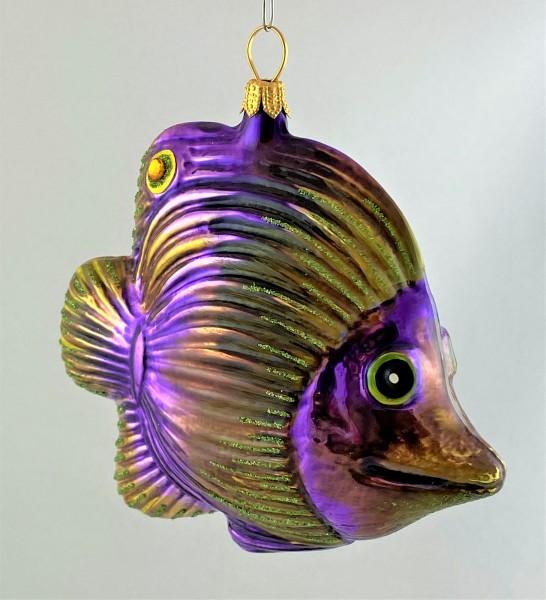 Violetter Riff-Fisch