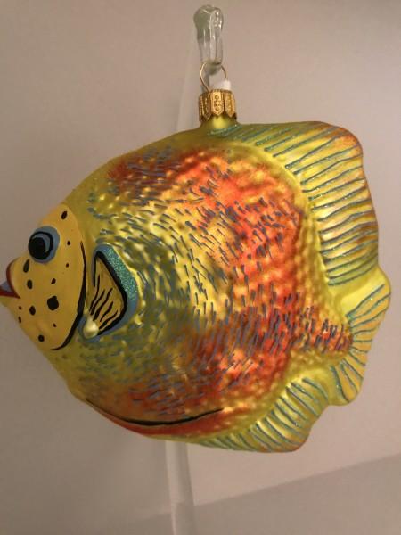 Grosser gelb oranger Riff-Fisch