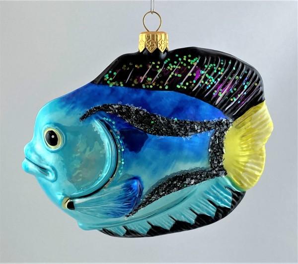 Grosser Kaiserfisch